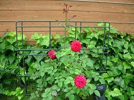 下関木の家づくり展示館 薔薇の館計画