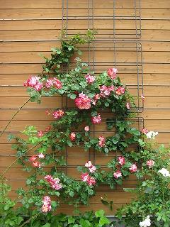 薔薇館「下関 木の家づくり展示館」