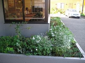 本社玄関脇の花壇